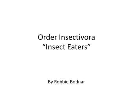 "Order Insectivora ""Insect Eaters"" By Robbie Bodnar."