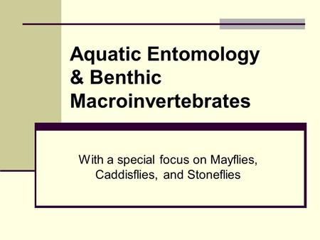 With a special focus on Mayflies, Caddisflies, and Stoneflies Aquatic Entomology & Benthic Macroinvertebrates.
