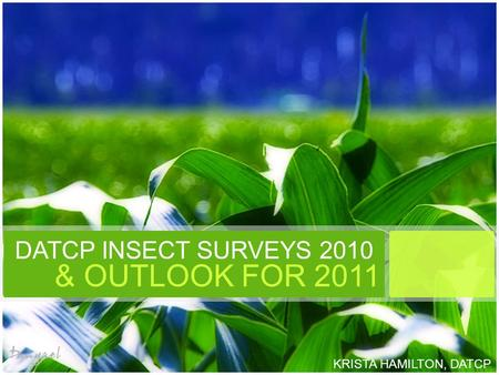 DATCP INSECT SURVEYS 2010 & OUTLOOK FOR 2011 KRISTA HAMILTON, DATCP.