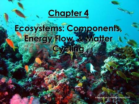 Ecosystems: Components, Energy Flow, & Matter Cycling