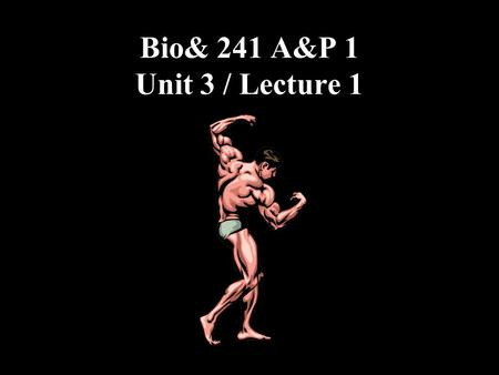 Bio& 241 A&P 1 Unit 3 / Lecture 1. Introduction to Muscles 1.Origin: Attachment of a muscle tendon to the stationary bone. 2.Insertion: Attachment of.