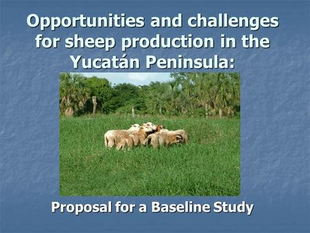 Opportunities and challenges for sheep production in the Yucatán Peninsula: Proposal for a Baseline Study.