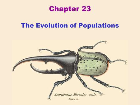 Chapter 23 The Evolution of Populations. Western Historical Context Gregor Mendel (1822-1884) Austrian monk whose breeding experiments with peas shed.