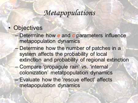 Metapopulations Objectives –Determine how e and c parameters influence metapopulation dynamics –Determine how the number of patches in a system affects.