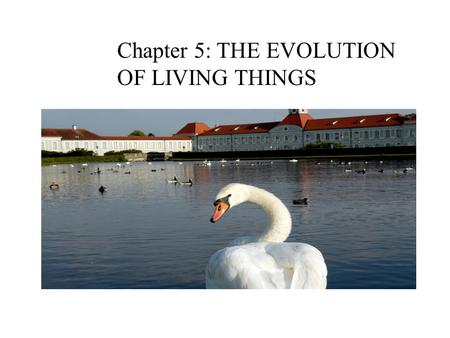 Chapter 5: THE EVOLUTION OF LIVING THINGS
