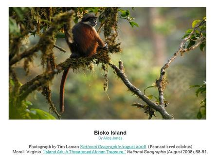 Bioko Island By Alice JonesAlice Jones Photograph by Tim Laman National Geographic August 2008 (Pennant's red colobus)National Geographic August 2008 Morell,