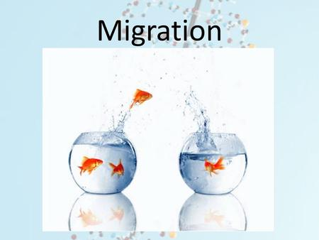 Migration. Q1. What would be the trend for allele frequencies of populations that that are large vs. very small? A.Large populations will have a greater.