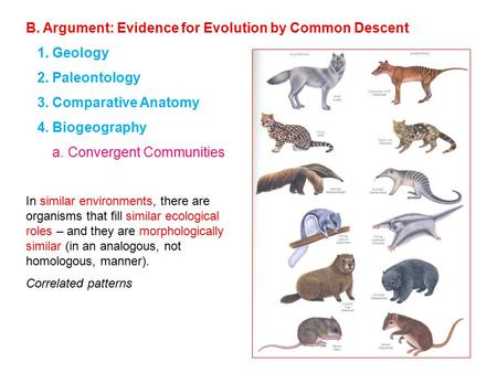 B. Argument: Evidence for Evolution by Common Descent 1. Geology 2. Paleontology 3. Comparative Anatomy 4. Biogeography a. Convergent Communities In similar.