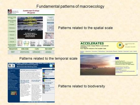 Fundamental patterns of macroecology Patterns related to the spatial scale Patterns related to the temporal scale Patterns related to biodiversity.