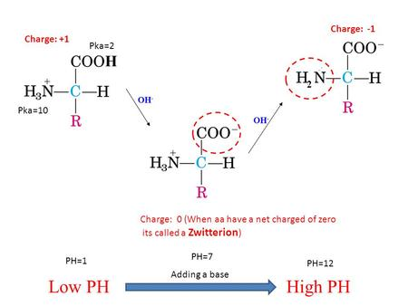 H OH - 2 Charge: +1 Charge: 0 (When aa have a net charged of zero its called a Zwitterion ) Charge: -1 Low PHHigh PH Adding a base PH=1 PH=7 PH=12 Pka=10.