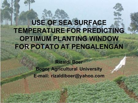 USE OF SEA SURFACE TEMPERATURE FOR PREDICTING OPTIMUM PLANTING WINDOW FOR POTATO AT PENGALENGAN Rizaldi Boer Bogor Agricultural University