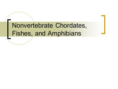Nonvertebrate Chordates, Fishes, and Amphibians. What Is a Chordate? Members of the phylum Chordata are called chordates. A chordate is an animal that.