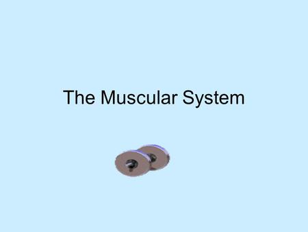 The Muscular System. Functions (what it does) Produces movement by contracting Helps with posture (result of muscles contracting) Joint stability Generates.