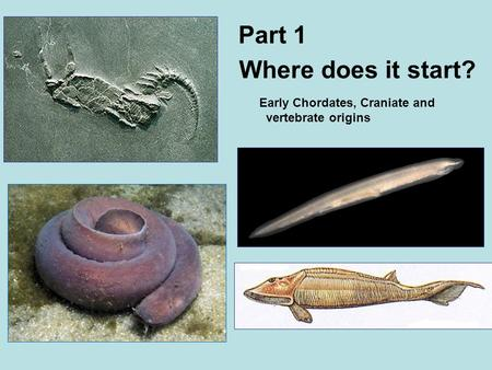 Early Chordates, Craniate and vertebrate origins Where does it start? Part 1.