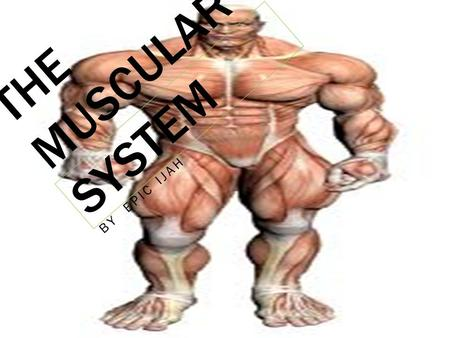 THE MUSCULAR SYSTEM BY EPIC IJAH INTRODUCTION YOU WILL BE SEEING INFORMATION ABOUT THE MUSCULAR SYSTEM LIKE: THE FUNCTIONS, THE GOOD THINGS OR BAD THINGS.