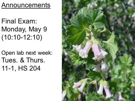 Announcements Final Exam: Monday, May 9 (10:10-12:10) Open lab next week: Tues. & Thurs. 11-1, HS 204.