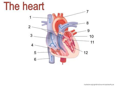 Superior vena cava The superior vena cava carries deoxygenated blood to the heart. The blood comes from the upper body.