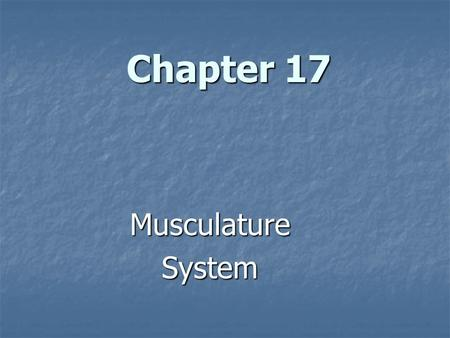 Chapter 17 MusculatureSystem. The Musculature System.