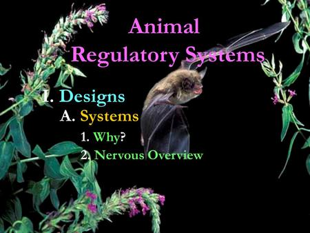 Animal Regulatory Systems I. Designs A. Systems 1. Why? 2. Nervous Overview.
