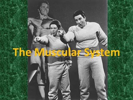 The Muscular System. Components Muscle Tissue Blood Vessels Nerve Cells Connective Tissue Ligaments.