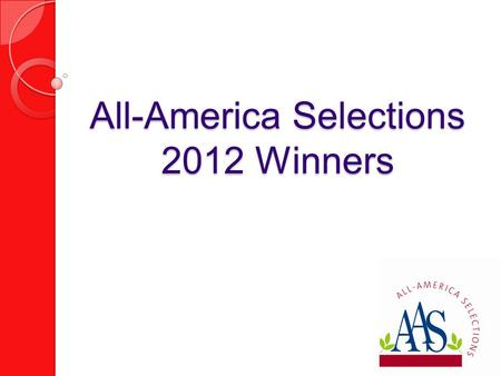 All-America Selections 2012 Winners. Ornamental Pepper 'Black Olive' AAS Flower Winner.