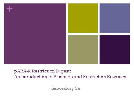 + pARA-R Restriction Digest: An Introduction to Plasmids and Restriction Enzymes Laboratory 2a.