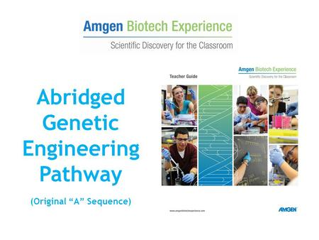 "Abridged Genetic Engineering Pathway (Original ""A"" Sequence)"