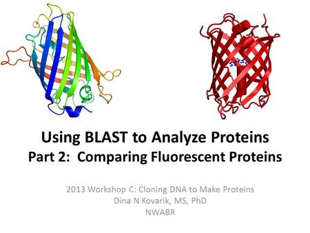 Using BLAST to Analyze Proteins Part 2: Comparing Fluorescent Proteins 2013 Workshop C: Cloning DNA to Make Proteins Dina N Kovarik, MS, PhD NWABR.