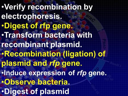 Verify recombination by electrophoresis. Digest of rfp gene. Transform bacteria with recombinant plasmid. Recombination (ligation) of plasmid and rfp gene.