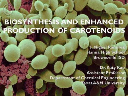 BIOSYNTHESIS AND ENHANCED PRODUCTION OF CAROTENOIDS J. Miguel Ramirez Hanna High School Brownsville ISD Dr. Katy Kao Assistant Professor Department of.