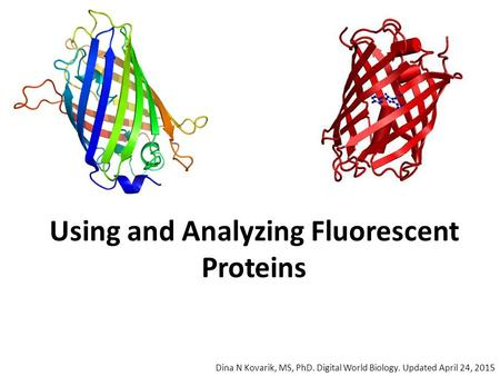 Using and Analyzing Fluorescent Proteins Dina N Kovarik, MS, PhD. Digital World Biology. Updated April 24, 2015.