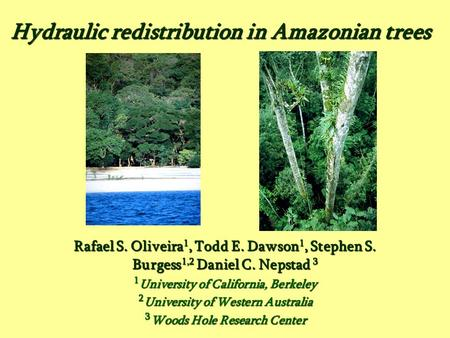 Hydraulic redistribution in Amazonian trees Rafael S. Oliveira 1, Todd E. Dawson 1, Stephen S. Burgess 1,2 Daniel C. Nepstad 3 1 University of California,