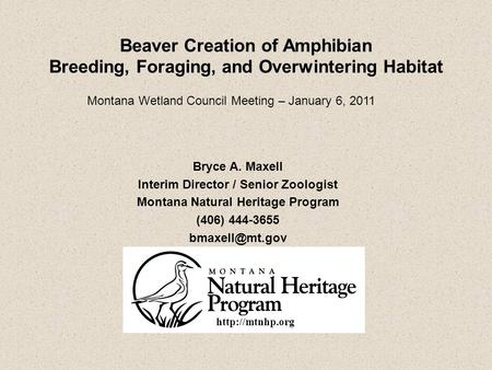 Beaver Creation of Amphibian Breeding, Foraging, and Overwintering Habitat Bryce A. Maxell Interim Director / Senior Zoologist Montana Natural Heritage.