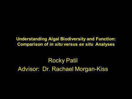 Understanding Algal Biodiversity and Function: Comparison of in situ versus ex situ Analyses Rocky Patil Advisor: Dr. Rachael Morgan-Kiss.
