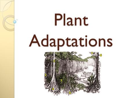 Plant Adaptations.