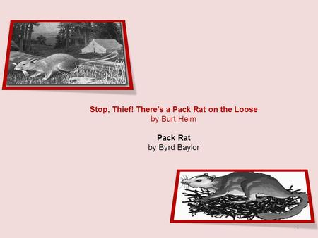 Stop, Thief! There's a Pack Rat on the Loose by Burt Heim Pack Rat by Byrd Baylor 1.