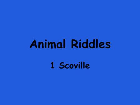 Animal Riddles 1 Scoville.