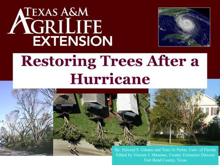 Restoring Trees After a Hurricane. WHAT IF ?? Could Happen HERE!