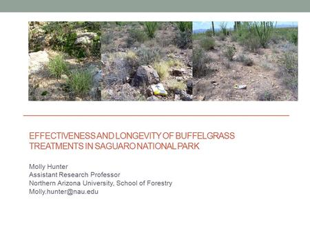 EFFECTIVENESS AND LONGEVITY OF BUFFELGRASS TREATMENTS IN SAGUARO NATIONAL PARK Molly Hunter Assistant Research Professor Northern Arizona University, School.
