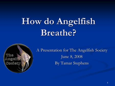 1 How do Angelfish Breathe? A Presentation for The Angelfish Society June 8, 2008 By Tamar Stephens.