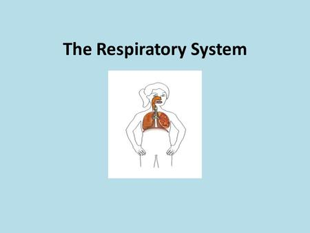 The Respiratory System. What's respiration? It's the movement of air in and out of the body to obtain oxygen and expel carbon dioxide.