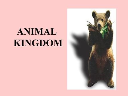 ANIMAL KINGDOM. Characteristics of all Animals They are made of cells, which form tissues, which form organs which form organ systems. They obtain food.