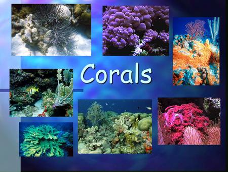 Corals. Fast Facts Corals are animals Two kinds Soft corals Hard corals (These build reefs!) They are made of tiny polyps that are genetically identical.