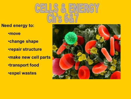 Need energy to: move change shape repair structure make new cell parts transport food expel wastes.