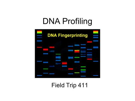 DNA Profiling Field Trip 411. Basics Nucleus contains 23 pairs of chromosomes. Each chromosome contains alleles or versions of traits (ex: eye color,