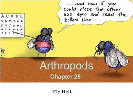 Arthropods Chapter 28. Arthropod characteristics Segmented bodies Tough exoskeleton made of chitin –Multiple shapes and textures Jointed appendages: legs.