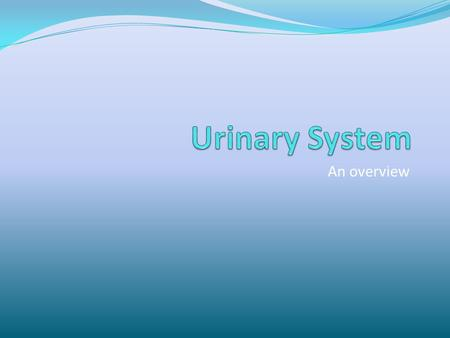 Urinary System An overview.