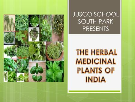 JUSCO SCHOOL SOUTH PARK PRESENTS Parts used: leaves, seeds and roots Uses:  Juice of leaves used in cough, hiccups, respiratory tract disorders.
