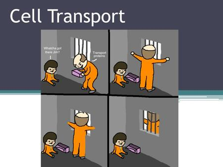 Cell Transport. Cell Membrane Review One of the primary functions of the cell membrane is to allow the passage of materials into and out of the cell.