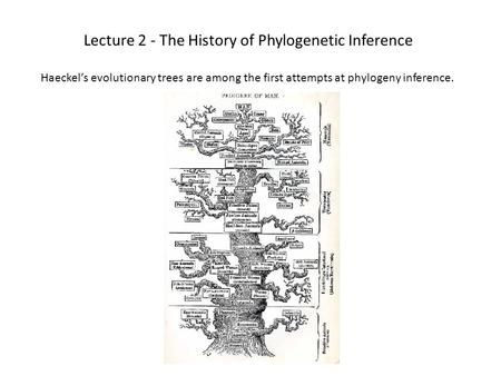 Lecture 2 - The History of Phylogenetic Inference Haeckel's evolutionary trees are among the first attempts at phylogeny inference.